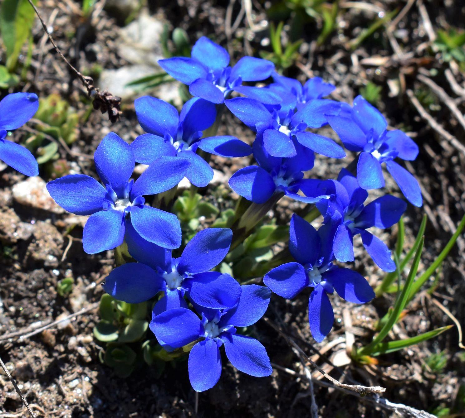 初夏から夏にかけて出会うことが出来る花々