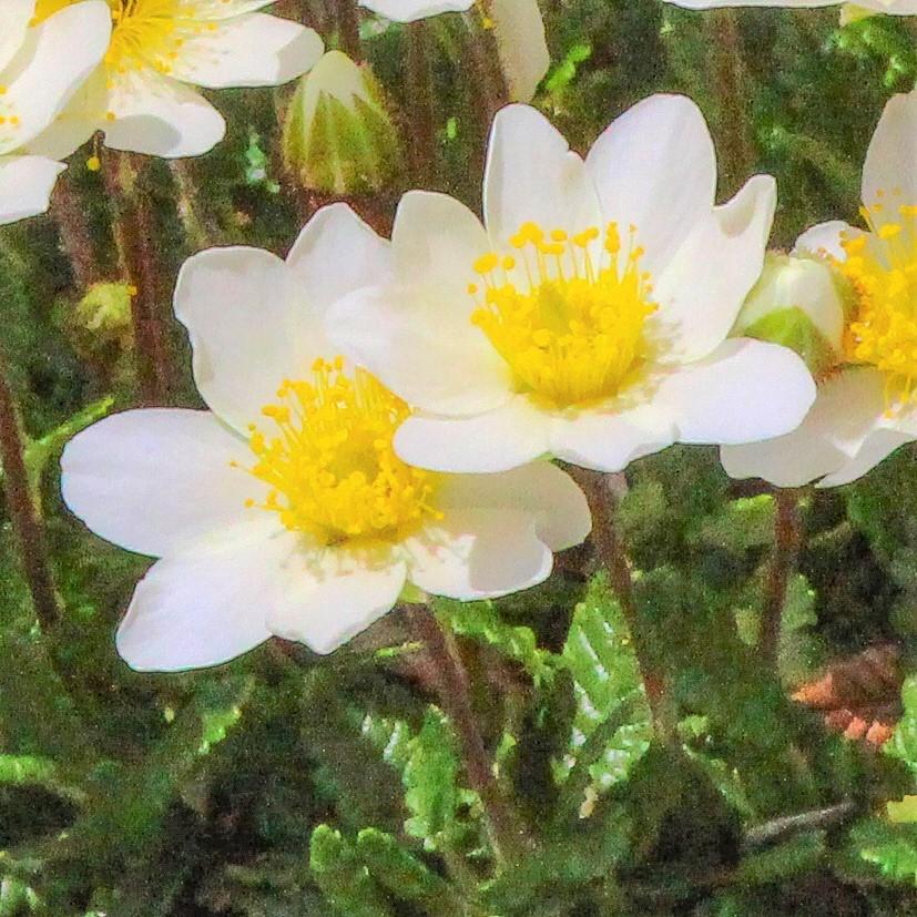 ハイキング中に出会った花々