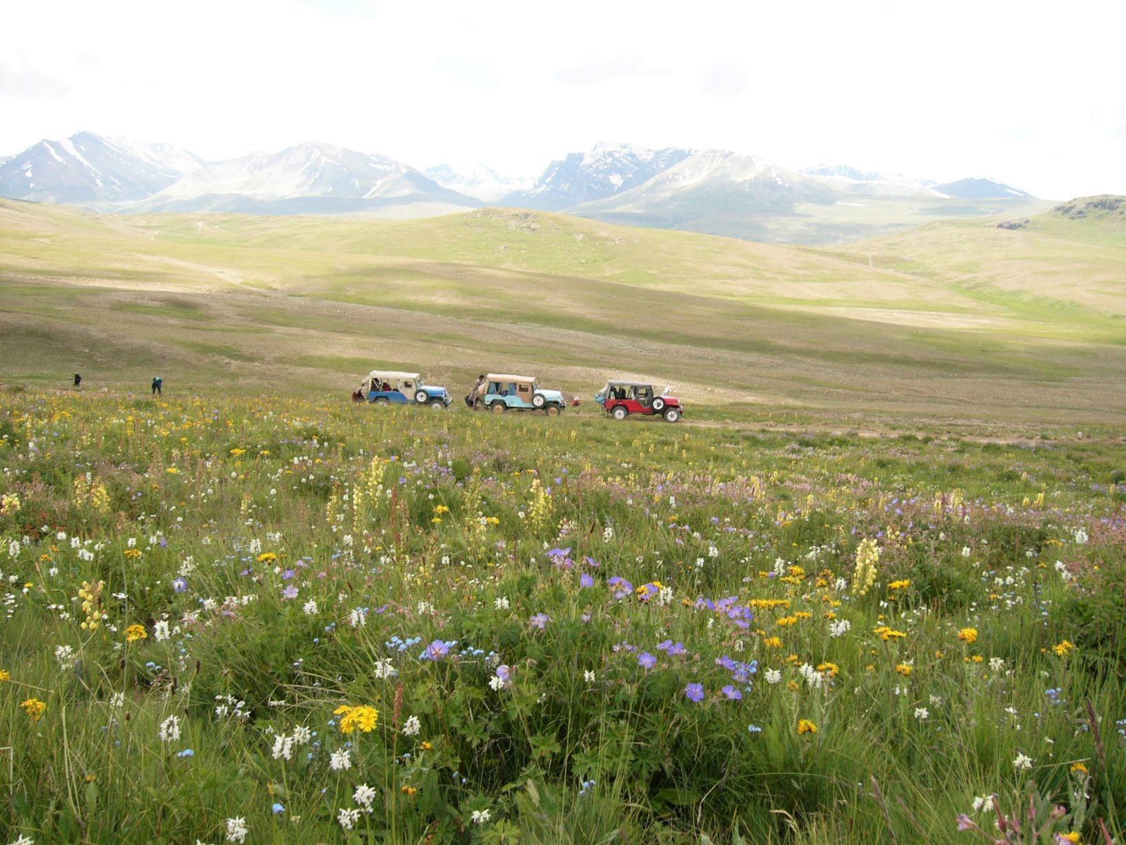 デオサイ高原では途中で花畑を散策