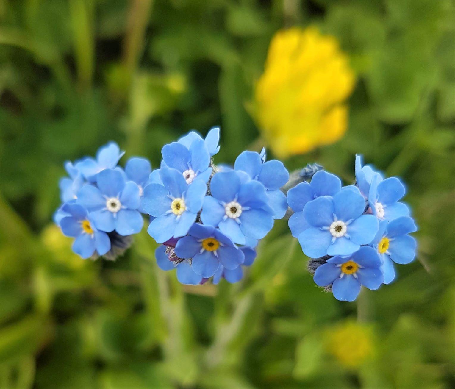 旅の途中で出会った花々