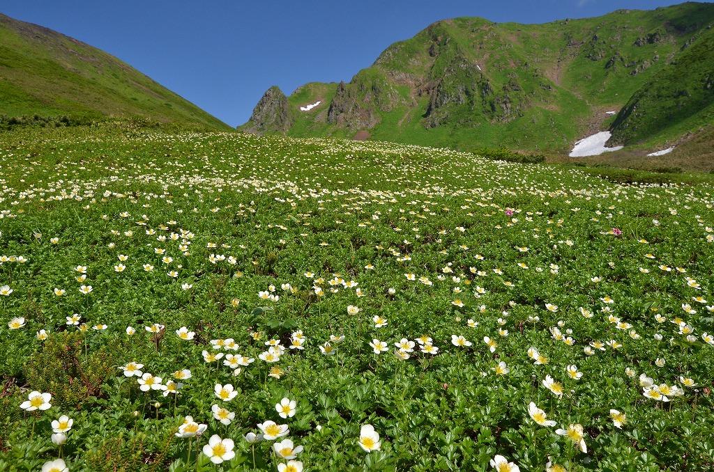 チングルマなどの高山植物の宝庫(秋田駒ケ岳)