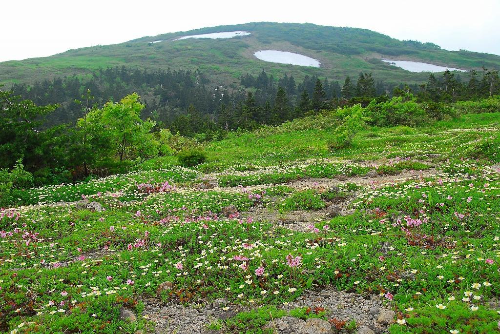 花の百名山 森吉山