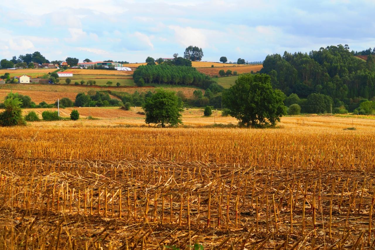 秋色に染まるスペインの大地