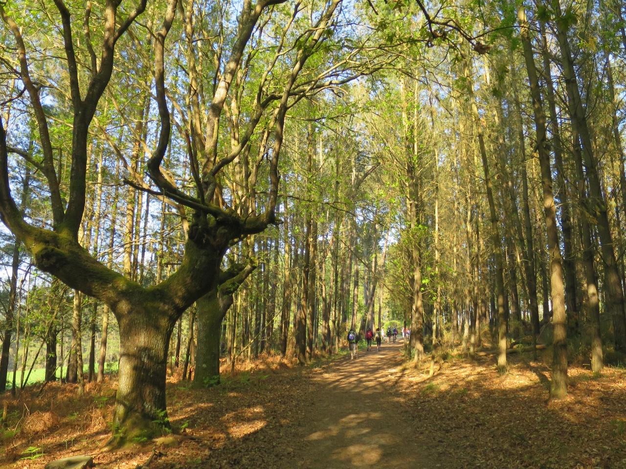 自然豊かな「フランス人の道」の巡礼路を歩く