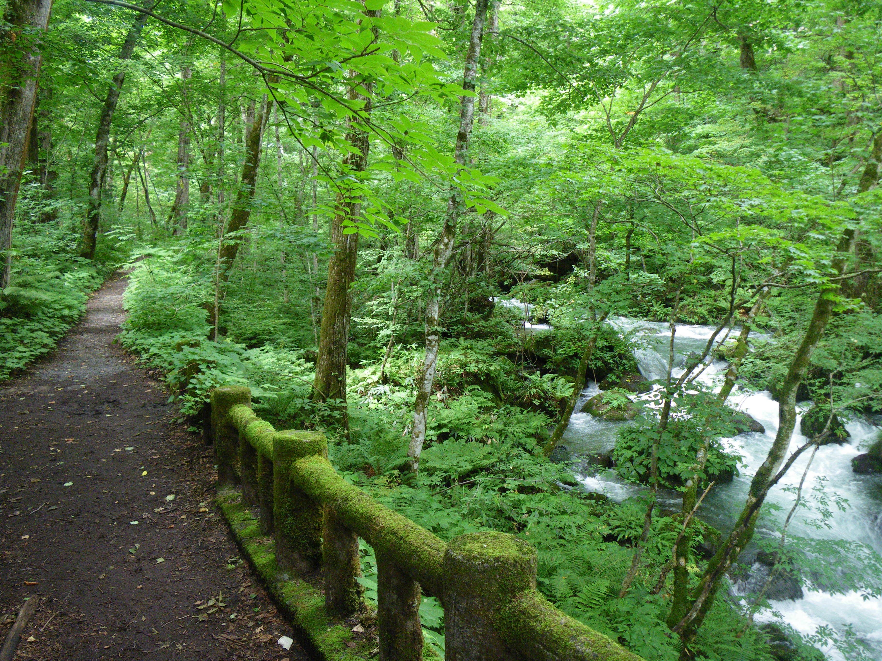 奥入瀬渓谷散策を行う