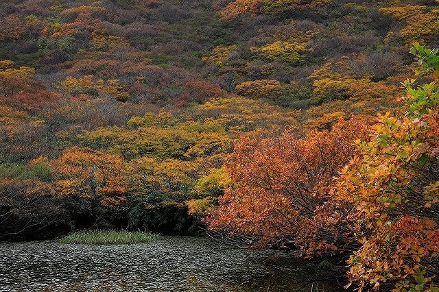 金北山縦走中の紅葉景色