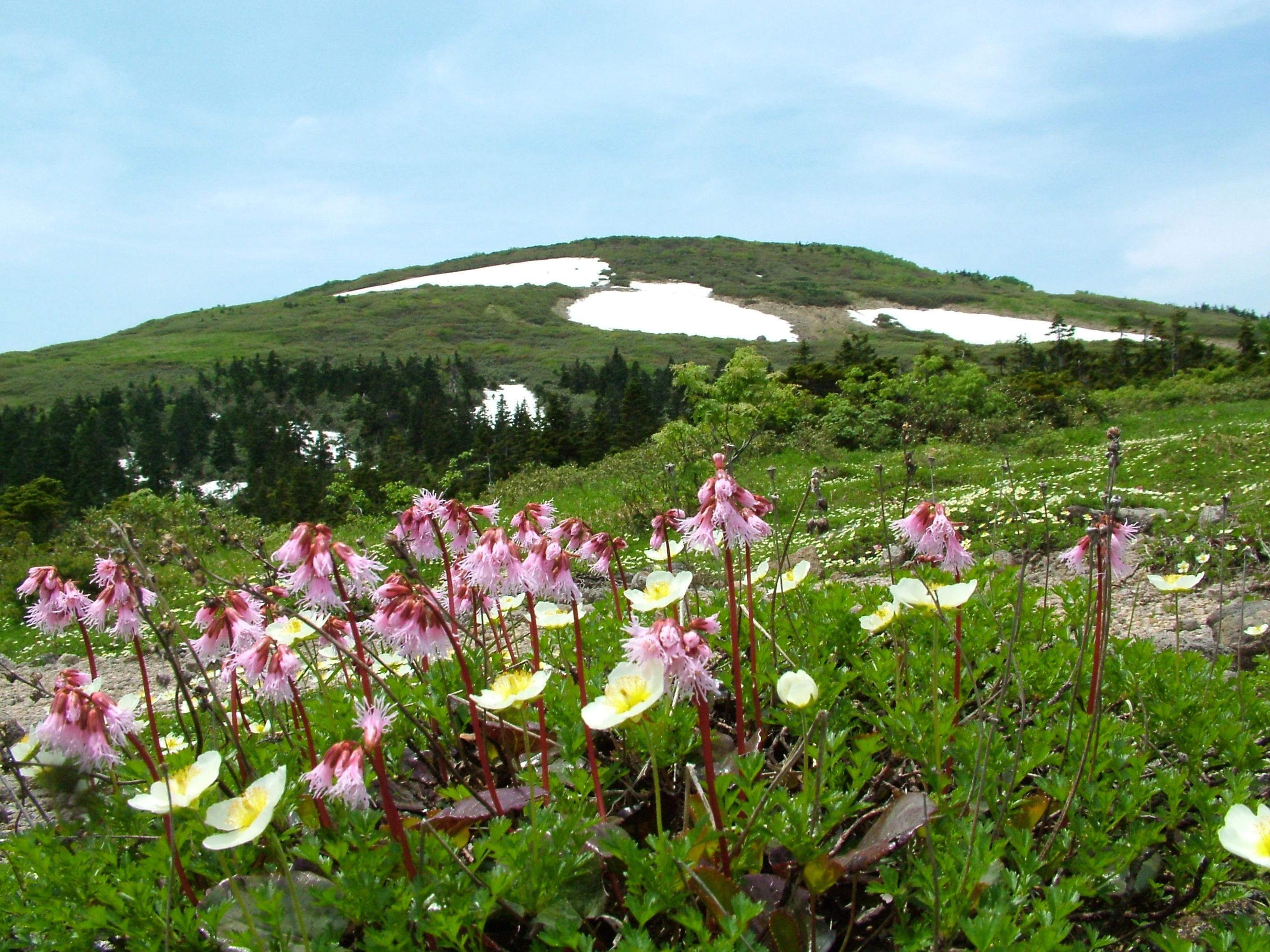 花の森吉山