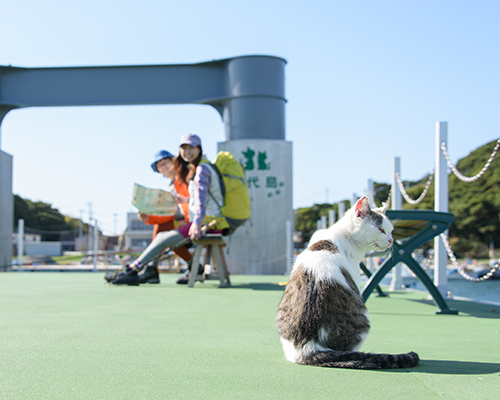 仁斗田港で1日目のハイキングを終了。猫にさよならを告げる(1日目)