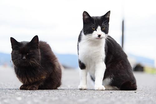 """田代島は通称""""猫の島""""と呼ばれるほど猫が多い島として人気(1日目)"""