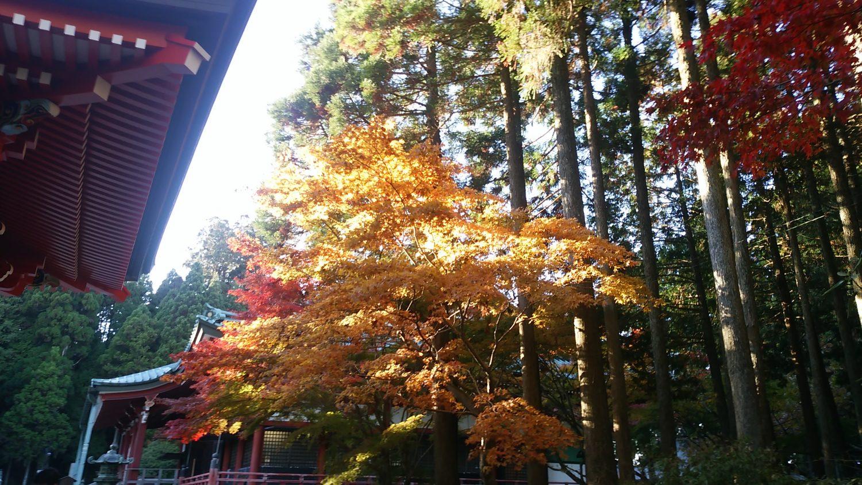 紅葉シーズンに比叡山を歩く