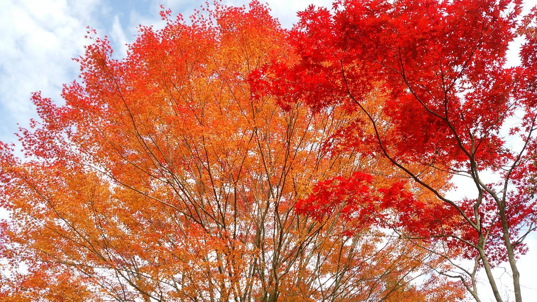 11月上旬は紅葉シーズンです。