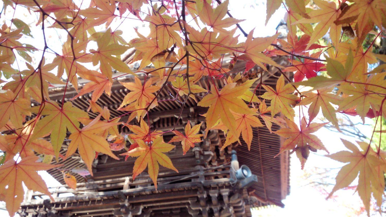 秋色に染まる比叡山