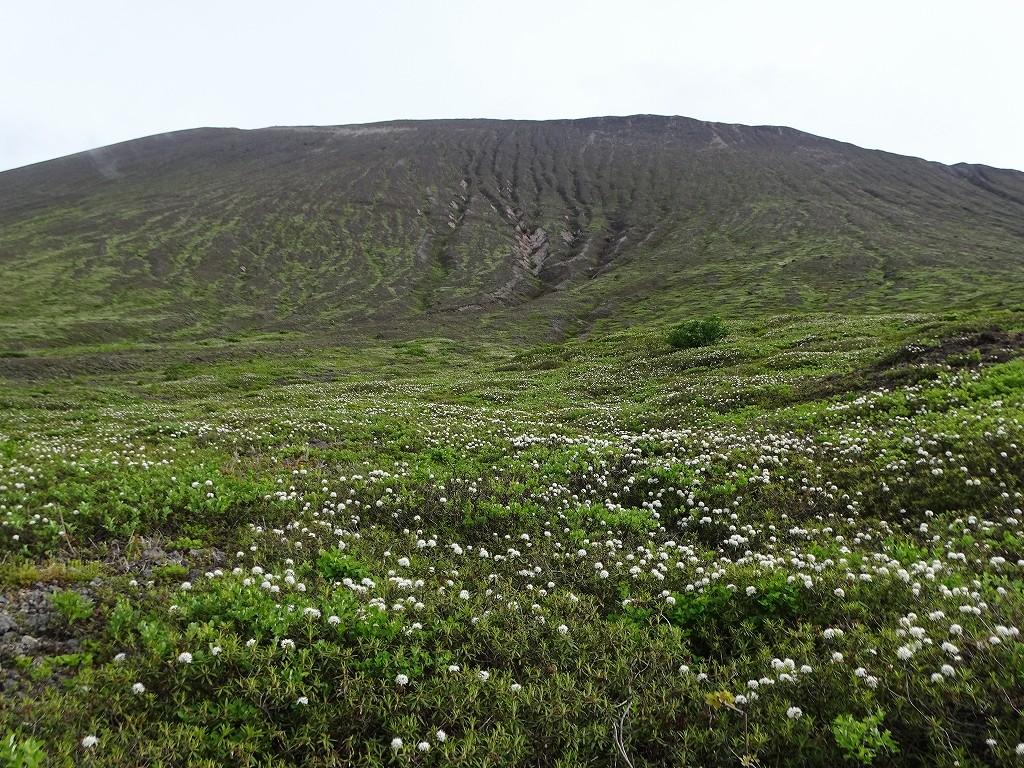 樽前山のお花畑