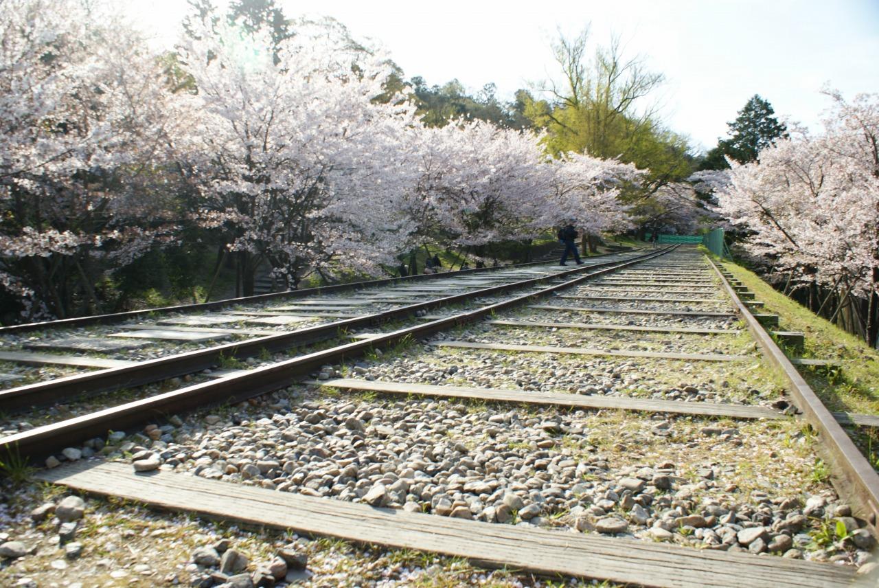 桜咲く蹴上インクライン