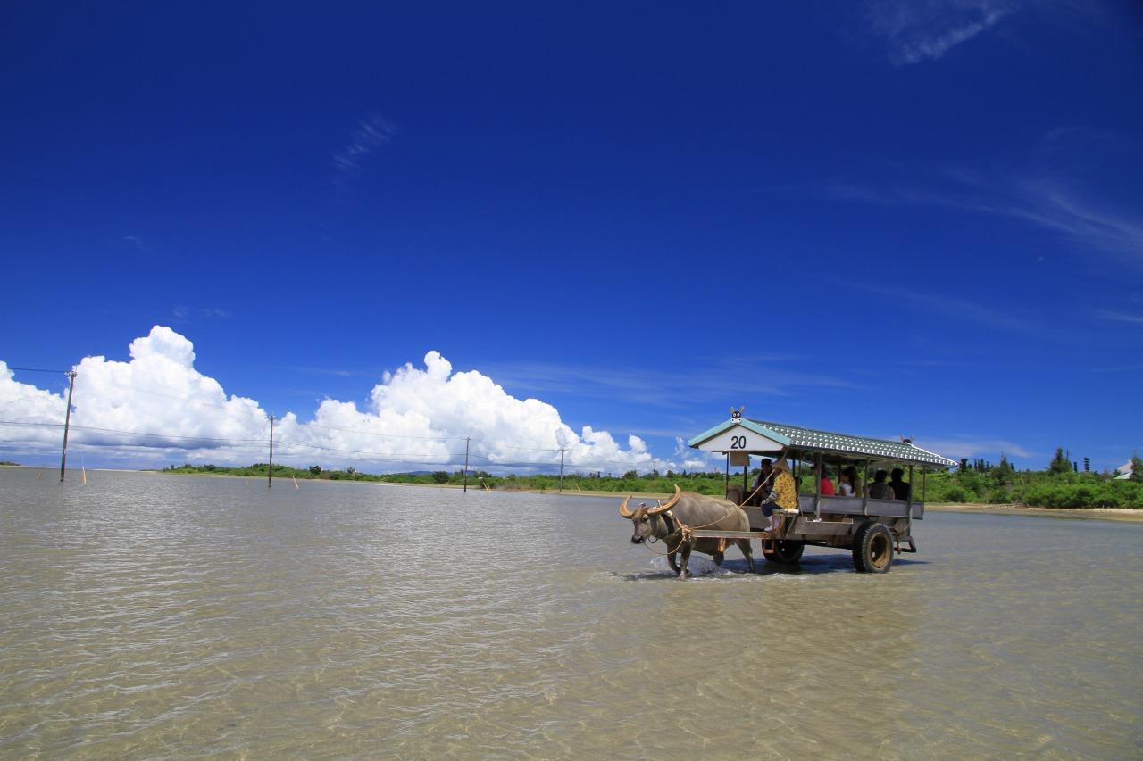 海を渡る水牛車に乗って由布島へ