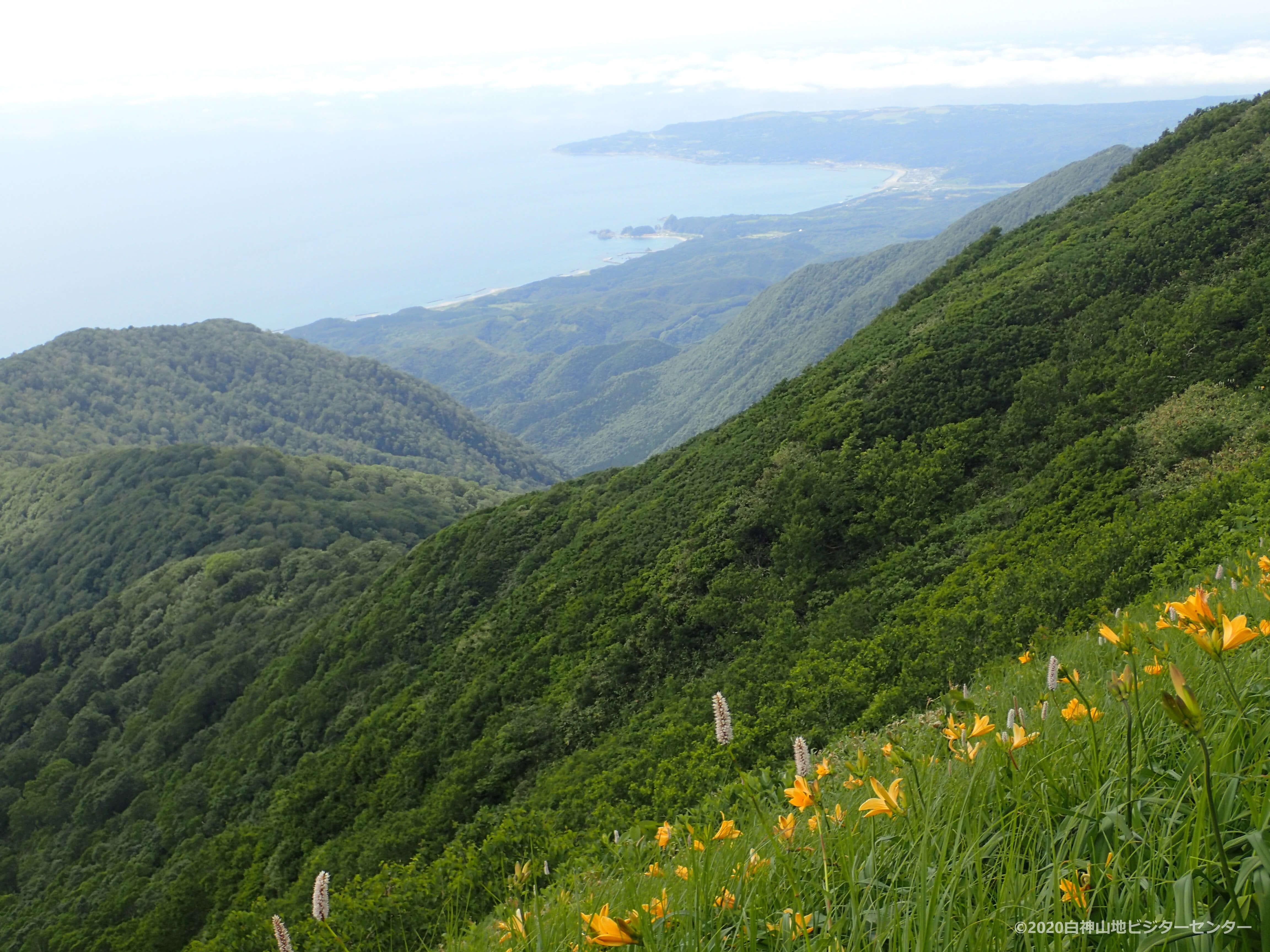 白神岳登山中に日本海を眺める