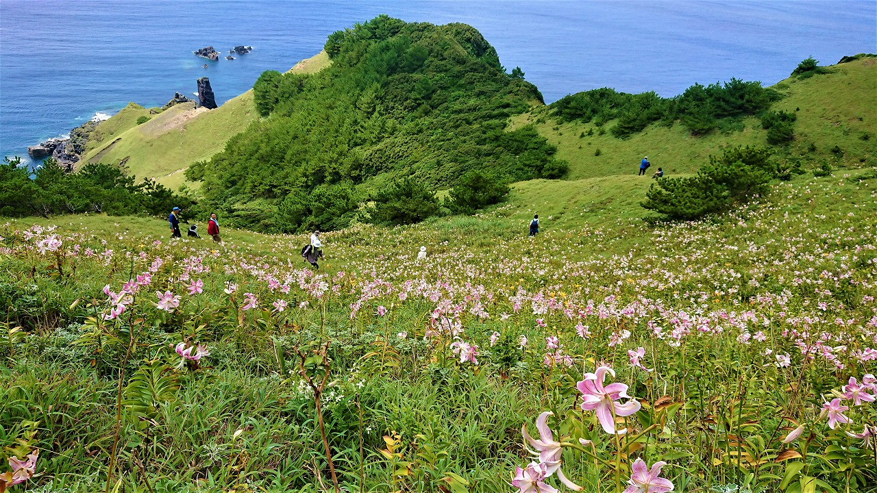 みっちり草原に咲くカノコユリ