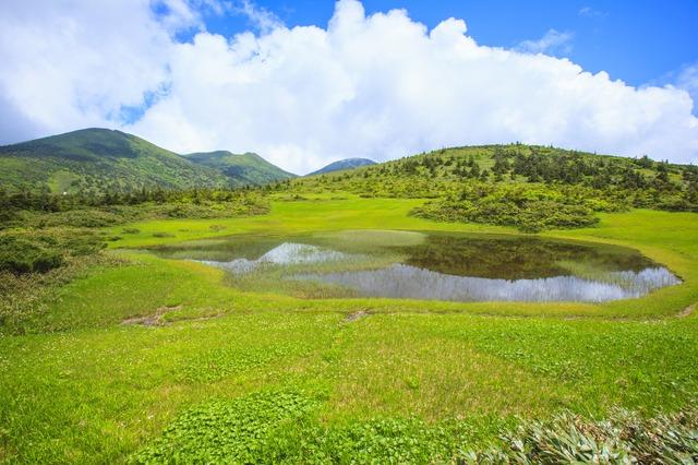 夏の田茂萢湿原(八甲田山)