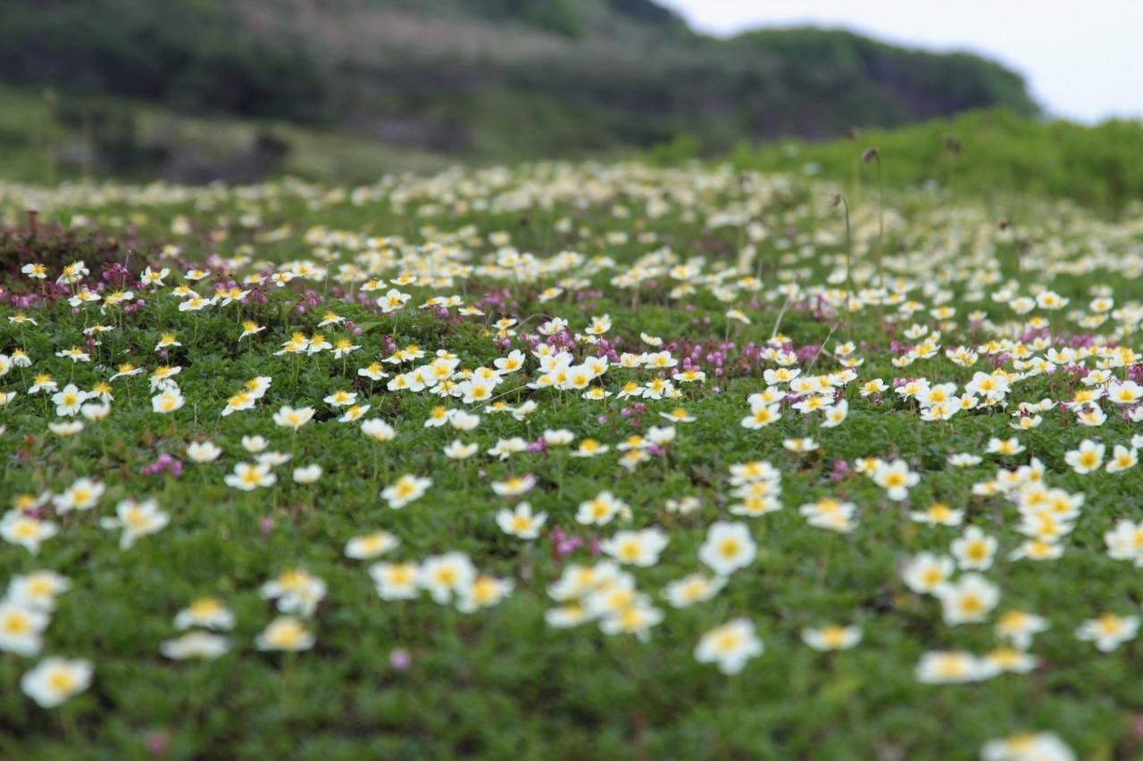 山肌を彩る花々