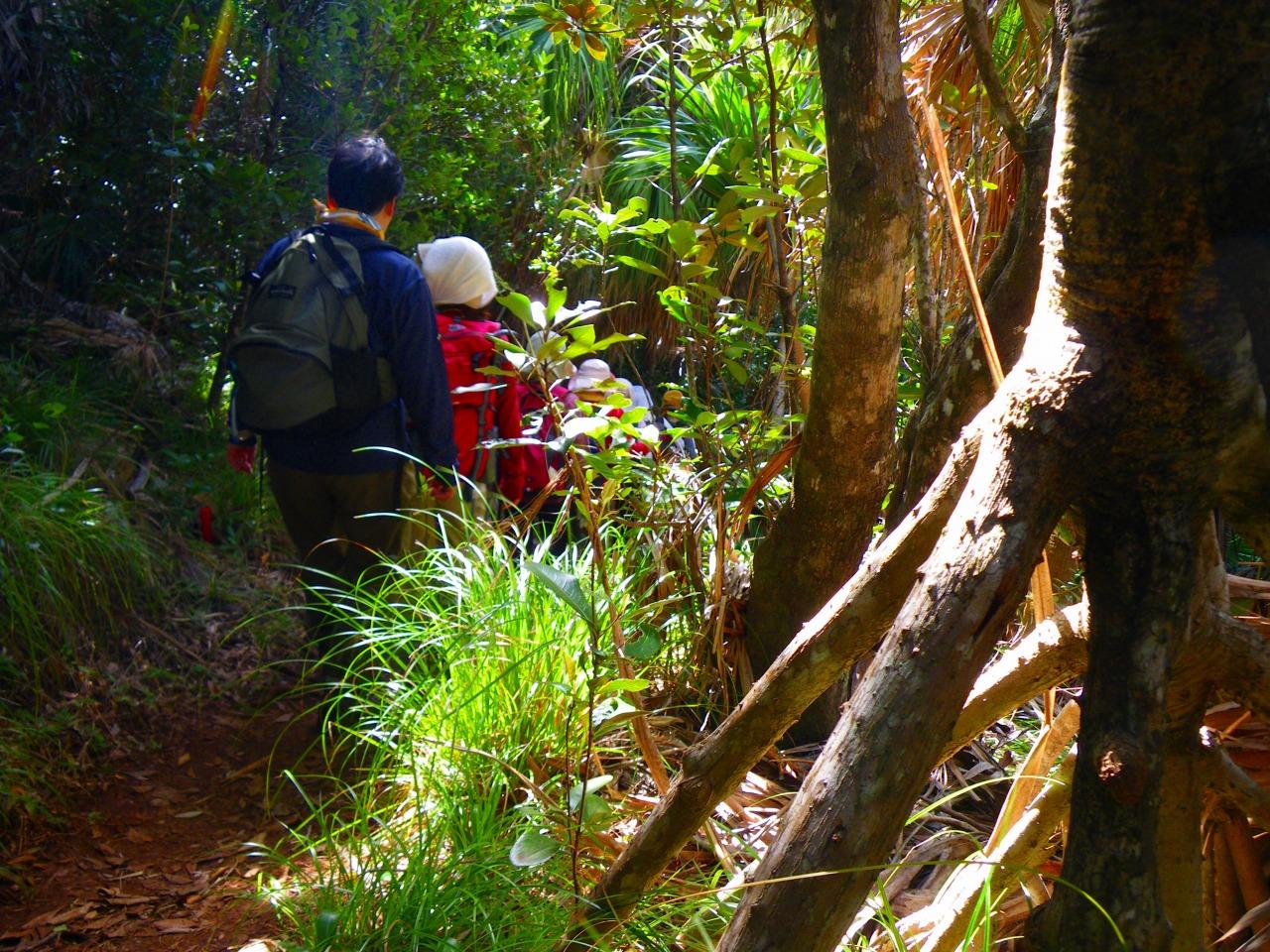 貴重な生態系をもつ森へ(タコノキ)