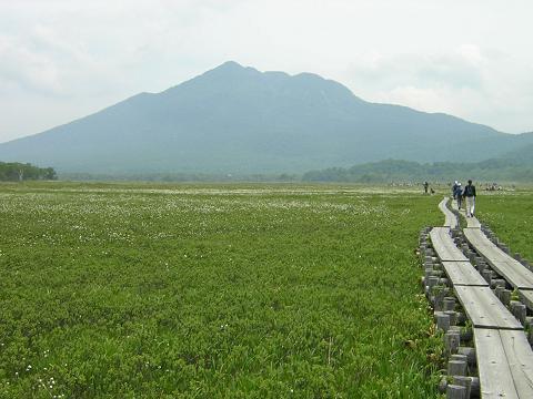 尾瀬ヶ原(牛首)周辺のワタスゲ群落