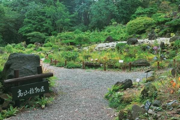 仙台市野草園 高山植物区