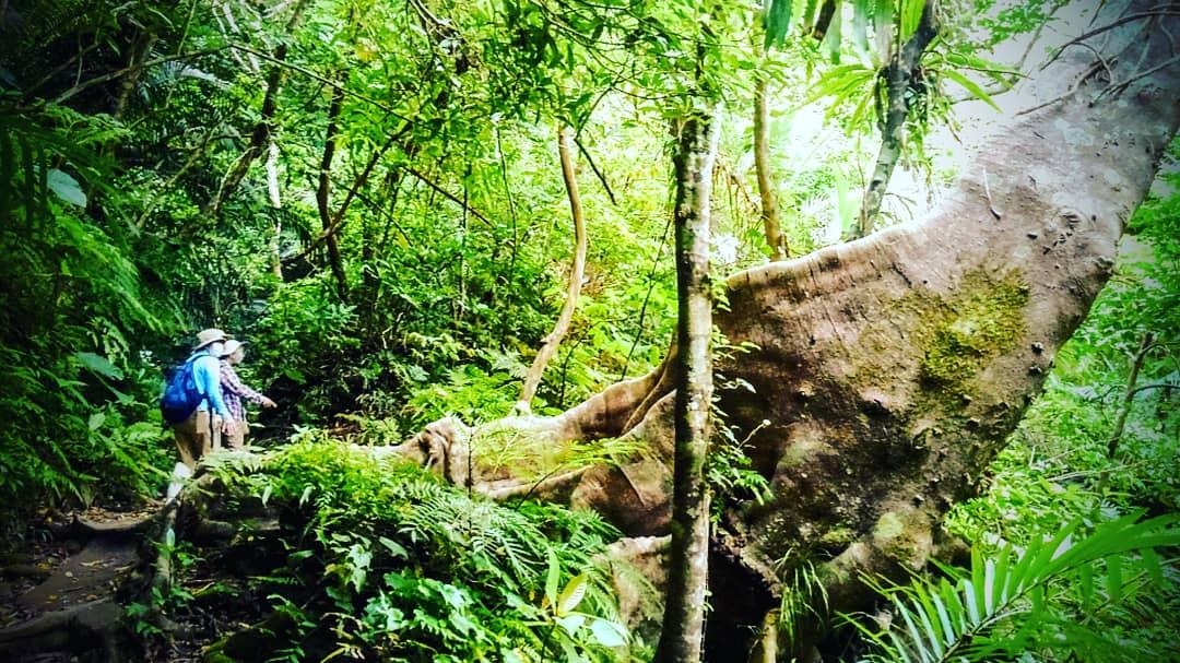 西表島・ジャングル・ハイキング