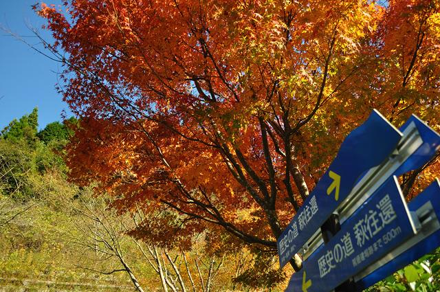 秋の萩往還