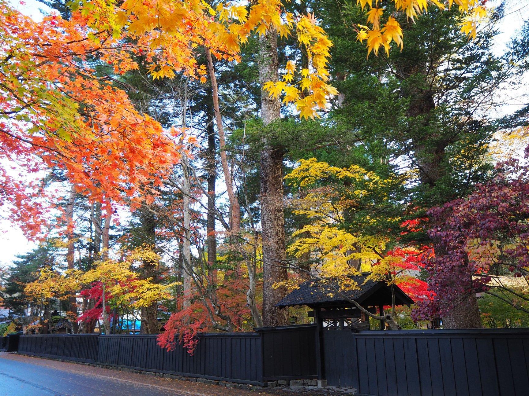 紅葉に彩られた、角館の武家屋敷