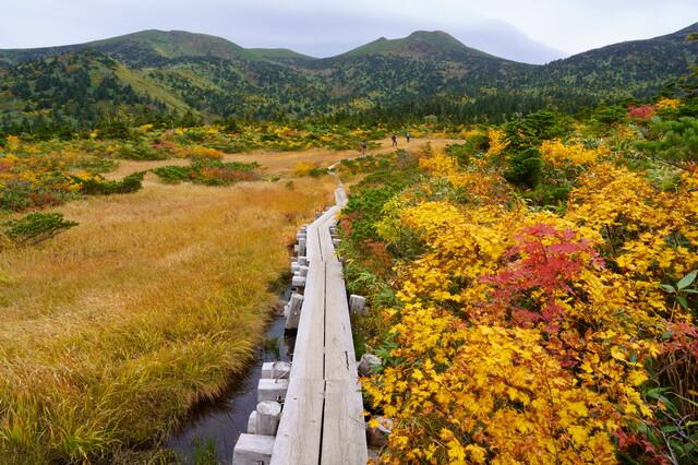 八甲田大岳と上毛無岱の鮮やかな紅葉