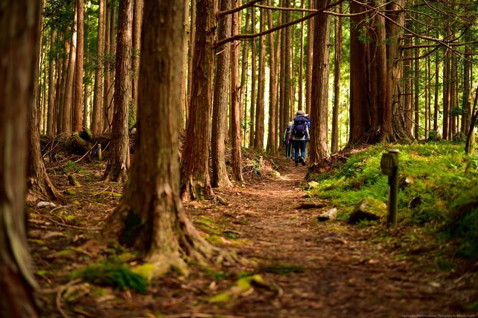 杉木立の中を行きます。