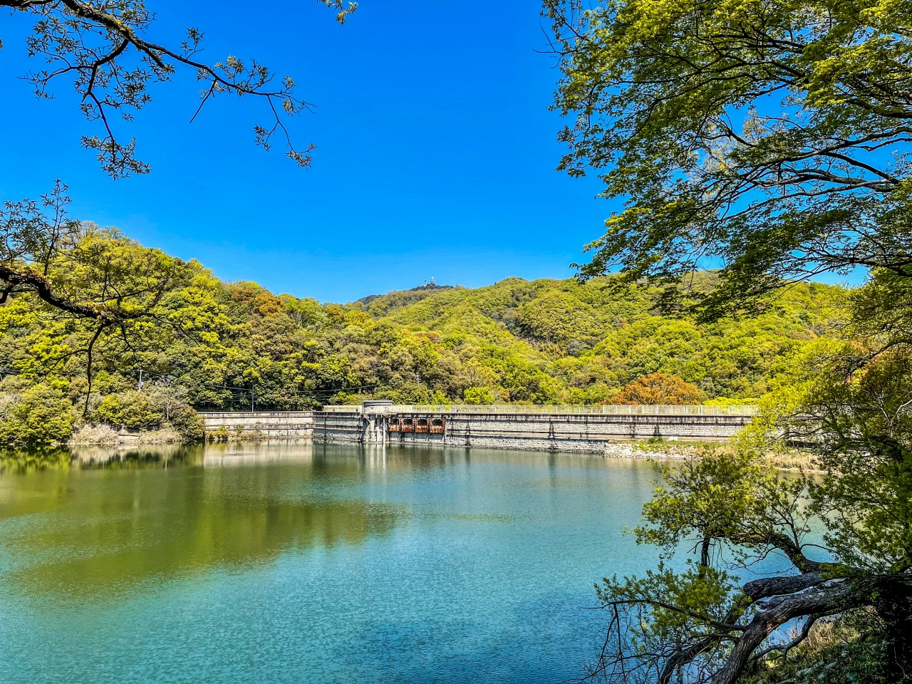 秋色に染まる菊水山