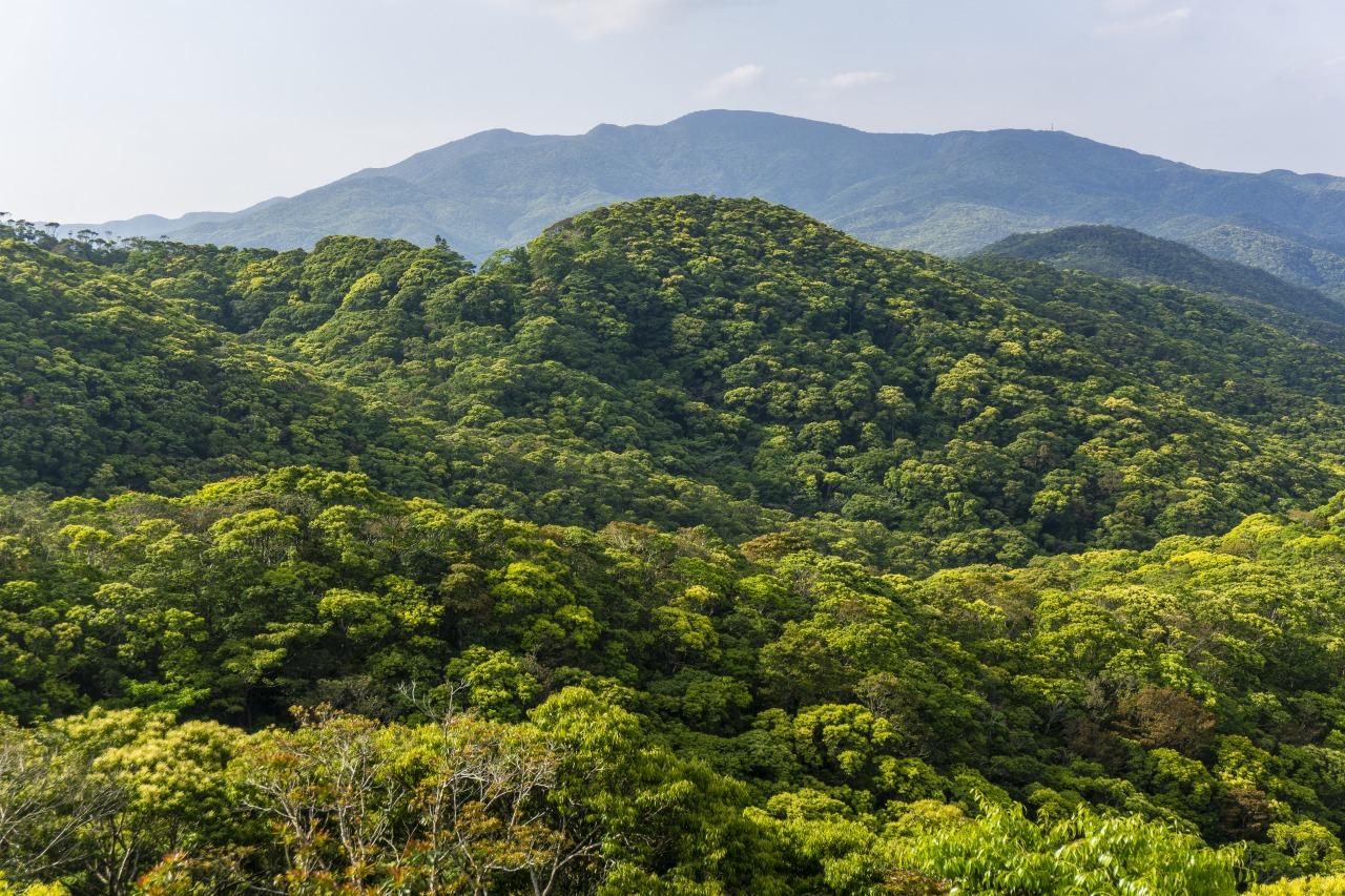 豊富な固有種が生息することで知られる島の最高峰・湯湾岳