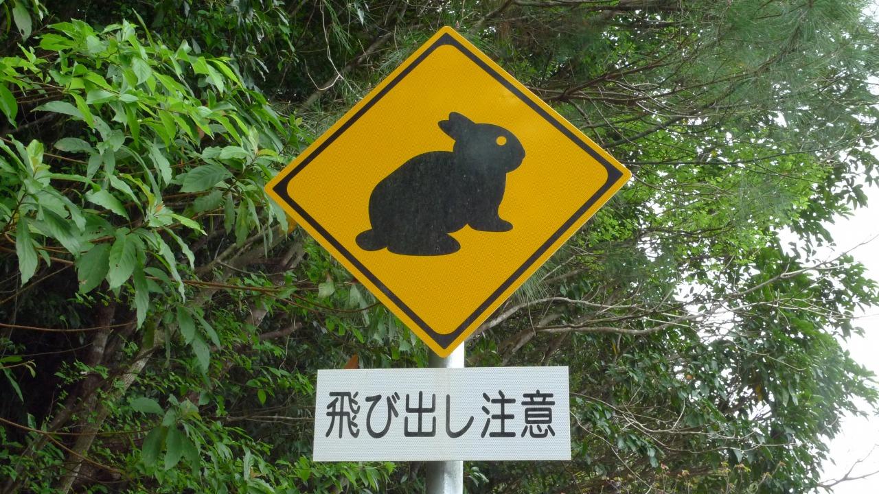 島にあるアマミノクロウサギ注意の看板