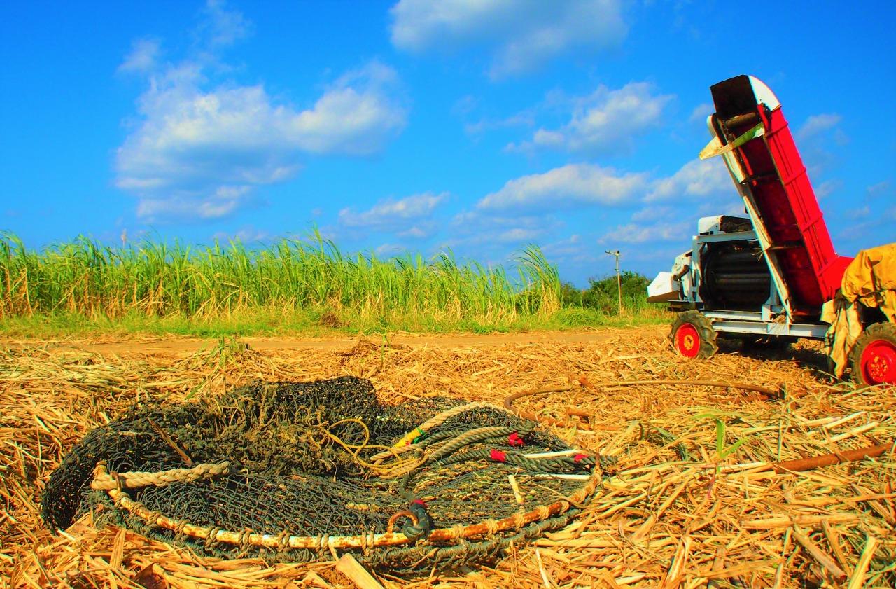 喜界島の12月はサトウキビの収穫シーズン