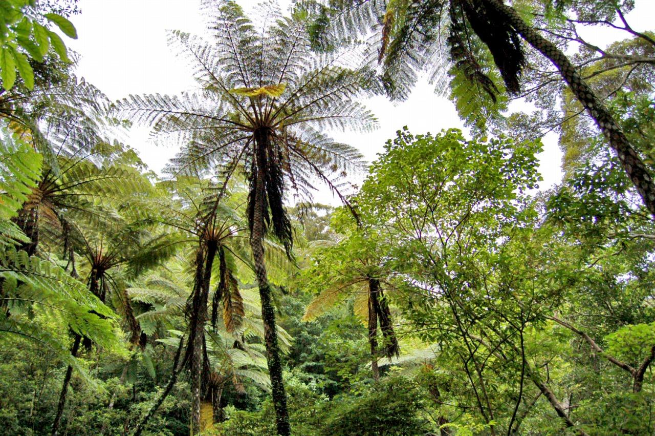貴重な原生林をハイキング