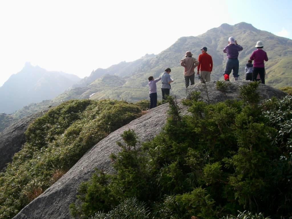 樹林限界からの宮之浦岳
