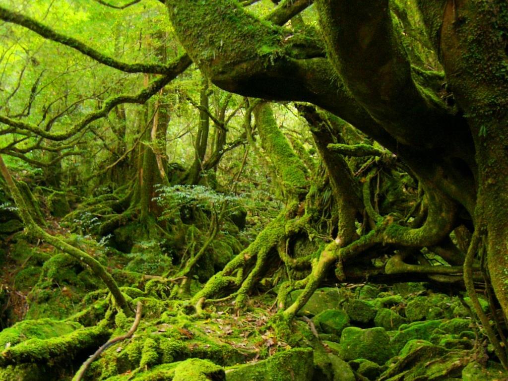 苔で覆われた幻想的な森(白谷雲水峡)