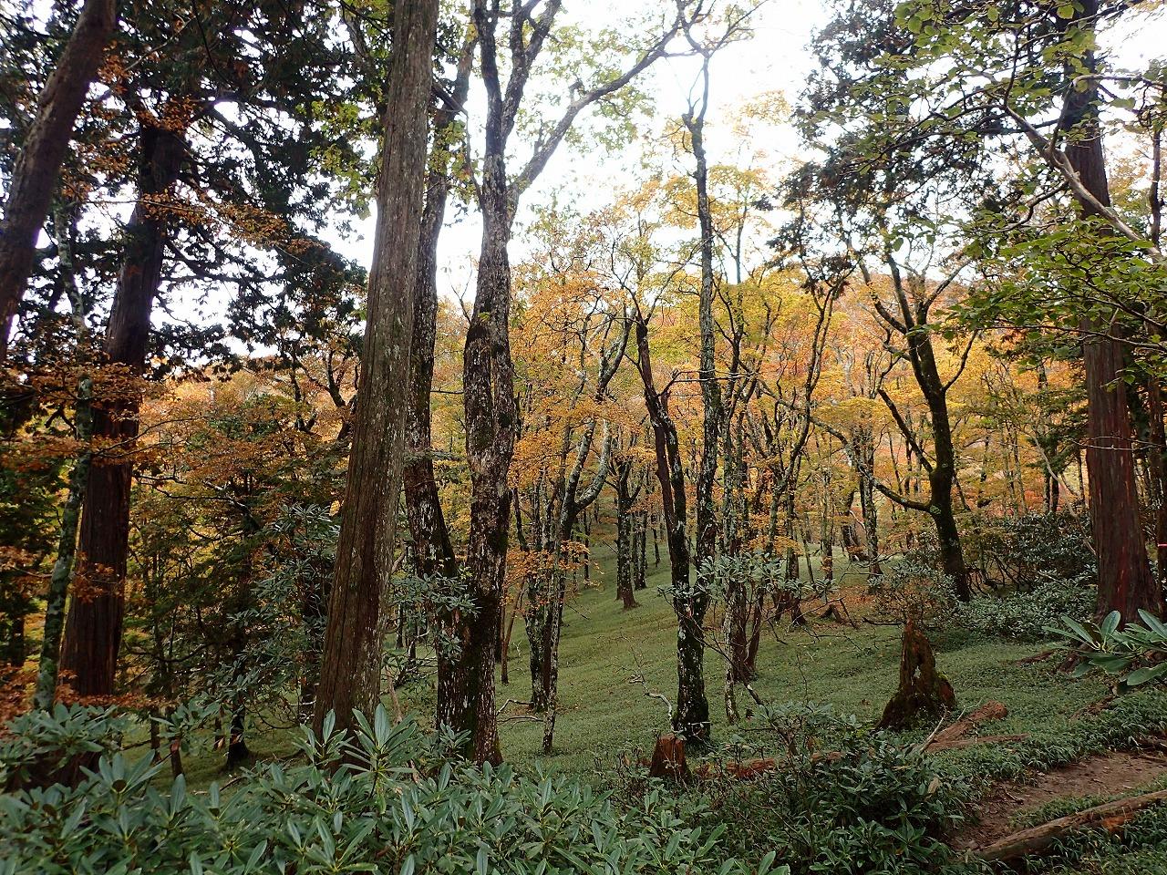 秋の大杉谷 大台ヶ原近し