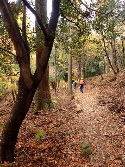 秋の中辺路 落葉が敷き詰められた古道を行く