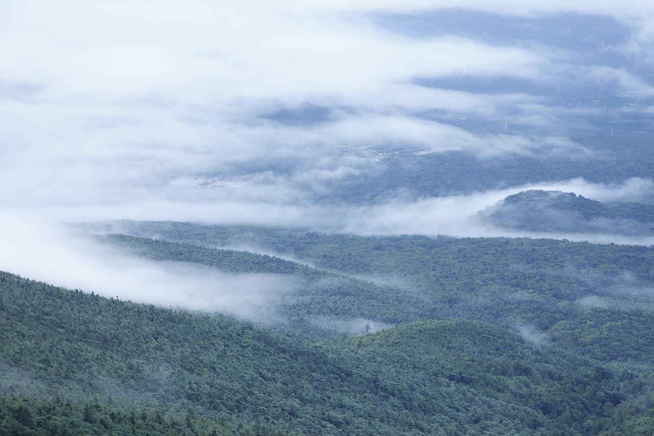 富士山麓に広がる樹林