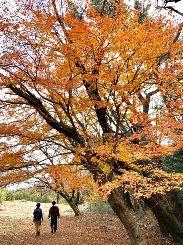 鎌倉時代の古道・湯坂路