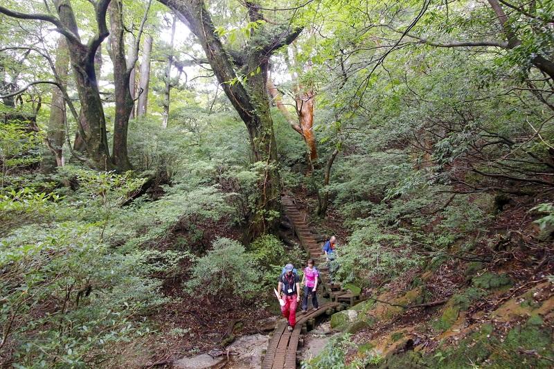 世界遺産の原生林を歩く